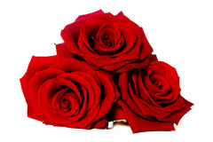 Three red roses isolated on white Stock Photography