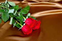Three red roses lay on satin fabric Royalty Free Stock Photo