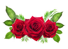 Three red roses with leaves on white background Stock Photography