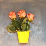Three red roses in little yellow pail on blue wooden background Stock Photo