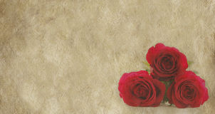 Three red roses on parchment background. Rustic parchment with three red roses in bottom right hand corner Stock Images