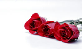 Three red roses in row. Three red roses in a row with space for copy text Stock Images
