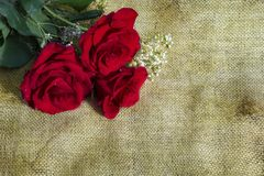 Three red roses on rustic background with copy space Royalty Free Stock Images