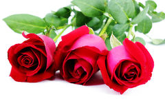 Three Red roses Stock Image
