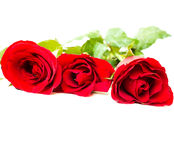 Three red roses Stock Images