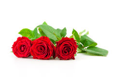 Three red roses on a white background Stock Photos