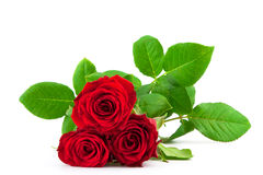 Three red roses on a white background Royalty Free Stock Photography