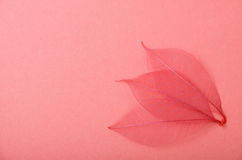 Three red skeleton leaves on pink paper Stock Photos
