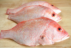 Three Red Snapper fishes Royalty Free Stock Photo