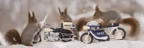 Three Red Squirrels With Police Motor Cycles Stock Image