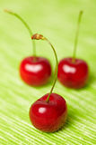Three red sweet cherries Stock Image