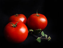 Three red tomatoes. Still life in black and red Royalty Free Stock Photo