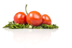 Three red tomatoes on a green parsley Royalty Free Stock Photo