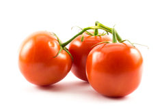Three red tomatoes on a white background.  royalty free stock images