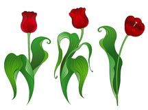 Three red tulips Stock Photo