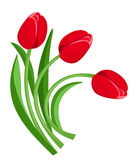 Three red tulips. Vector illustration. Royalty Free Stock Photo