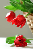 Three red tulips in basket Stock Photos