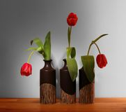 Three red tulips in black vases Stock Image