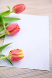 Three red tulips with note paper copy space Royalty Free Stock Image