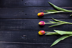 Three red tulips on rustic wooden background with spase for your Royalty Free Stock Image