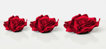 Three red velvet roses Royalty Free Stock Photography