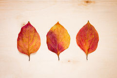 Three red-yellow leaves on a board Stock Images