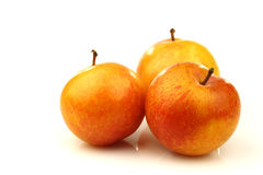 Three red and yellow plums Royalty Free Stock Photos