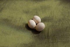 Three Reptile Eggs. Reptile eggs (snake) on a green cloth - Huevos de reptil ( culebra ) sobre un paño verde Royalty Free Stock Photos