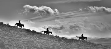 Three Ridge Riders Silhouette and the Land in pano style and black and white. A black and white image; a silhouette of a three lone cowboys riding horses down a Royalty Free Stock Images