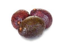 Three ripe avocados Stock Photography