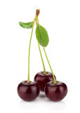 Three ripe cherries Stock Images