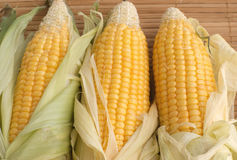 Three ripe corns cob on table napkin Royalty Free Stock Photography