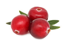 Three ripe cranberries with green leaves (isolated) Royalty Free Stock Photo