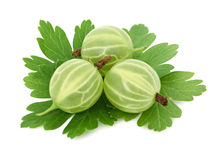 Three ripe green gooseberries with leaves (isolated) Royalty Free Stock Image