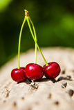 Three ripe juicy cherries Royalty Free Stock Photos