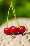 Three ripe juicy cherries Stock Image