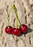 Three ripe juicy cherries Stock Photos