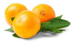 Three ripe mandarins Royalty Free Stock Photo