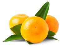 Three ripe mandarins isolated Royalty Free Stock Photos
