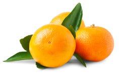 Three ripe mandarins isolated Royalty Free Stock Photo