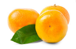 Three ripe mandarins isolated on white background Royalty Free Stock Photo