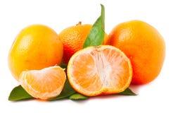 Three ripe mandarins isolated on white background Royalty Free Stock Image