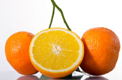 Three ripe oranges. Three ripe and juicy oranges on a branch Royalty Free Stock Photography