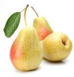 Three ripe pears. Royalty Free Stock Photo