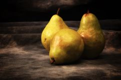 Three ripe pears on gray studio backdrop stock image