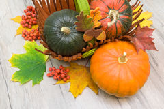 Three ripe pumpkins and maple leaves close-up Royalty Free Stock Images