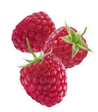 Three ripe raspberries isolated on white background royalty free stock images