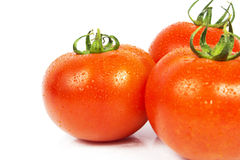 Three ripe red tomato with water drops. A Fresh Wet Tomato Isolated on White Stock Photography