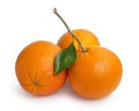 Three ripe round oranges with stem and leaf Stock Image
