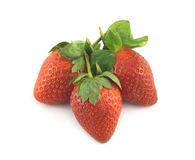 Three ripe strawberries isolated closeup Stock Images